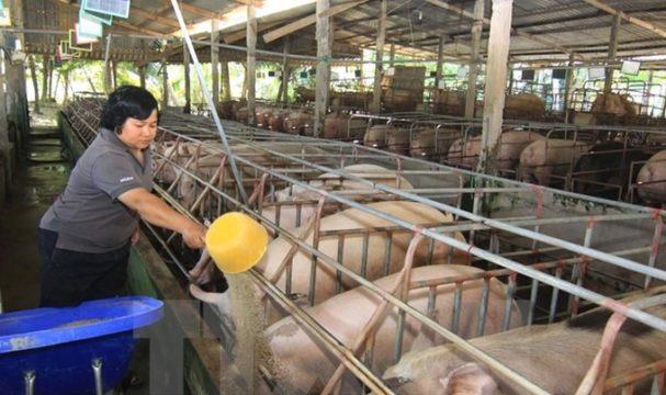 animal-husbandry-pigs-nagaland.jpg